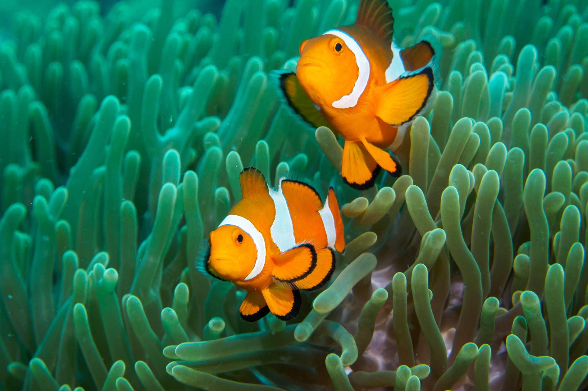 Sopravvivere sott'acqua: con le branchie si può