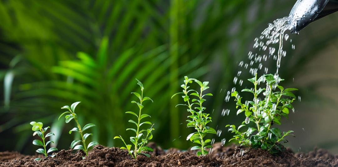 Piante: pollice verde anche in estate