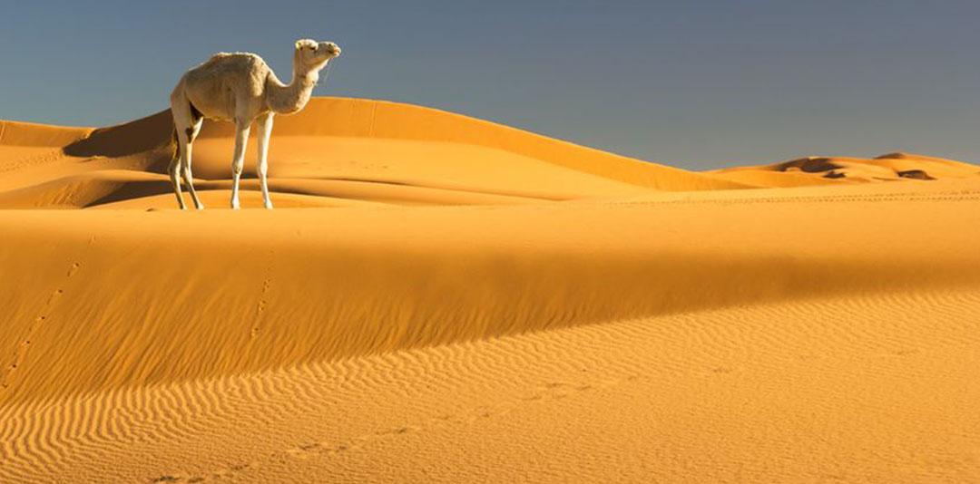Animali e piante da record nei deserti del mondo