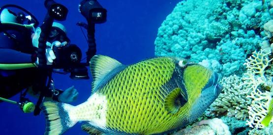 L'affascinante storia della fotografia subacquea